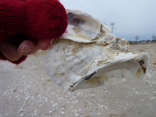 me holding a shell