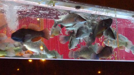 Fishtank in Chinatown