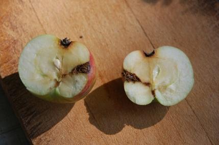 apple 2 margo
