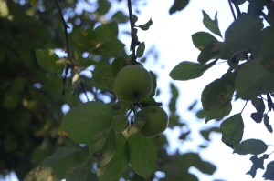 apple 4 margo