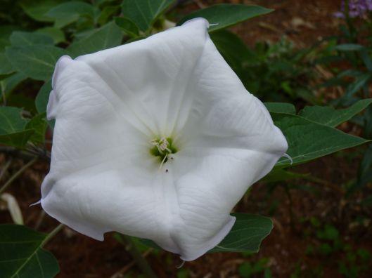 flower 231