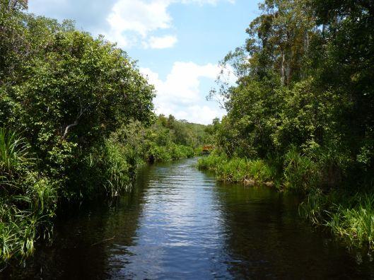Off the main stream of the Sekonyer River. Tanjung Puting National Park. Kalimantan.