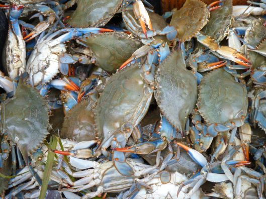 Blue crabs. Arthur Ave. The Bronx
