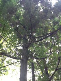 Tank Tree
