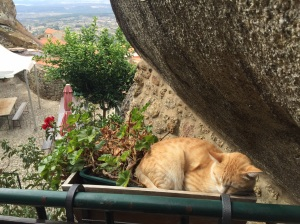 Sleeping cat in Portugal