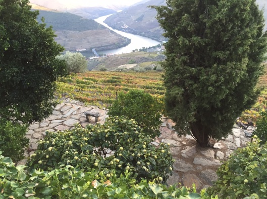 View from terrace of hotel in Casal de Loivois in the Alto Douro